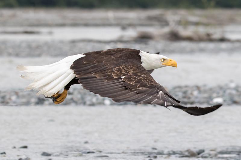Alaska 2015 - Skagway -  072715-073-Edit-Edit.jpg