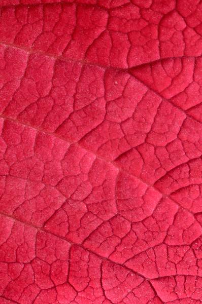pink leaf close-up