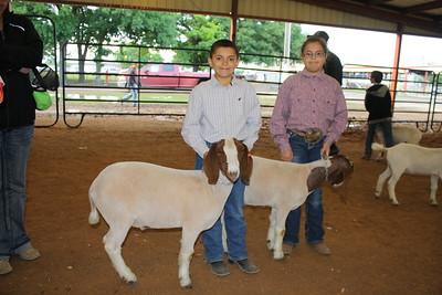 HCF Junior Market Goat Show