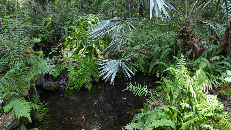 Pond surrounded by ferns