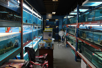 Deep Blue Aquarium