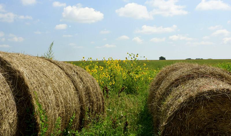 Hay Bales, Sunflowers & Corn