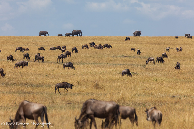 North_Serengeti-17.jpg