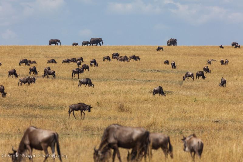 North_Serengeti-17.jpg