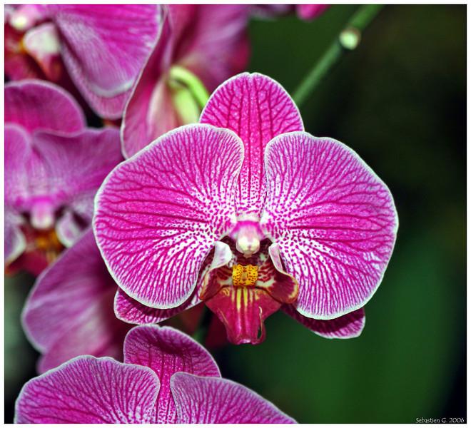 Orchid4_082209.jpg