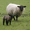 Ewe & Lamb. 06W15N61