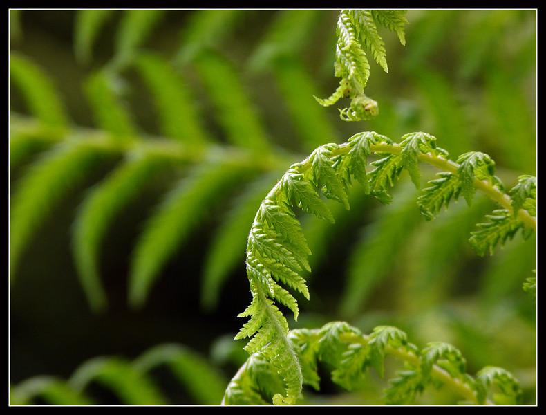 2011GB-Eden-Project-029.jpg