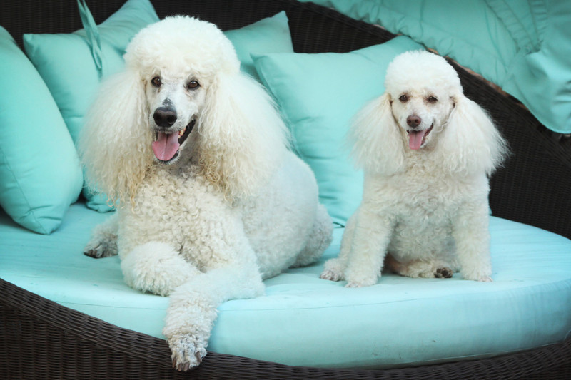 Sophie and Truffles.jpg