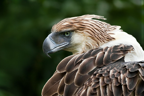 Smile Philippine Eagle