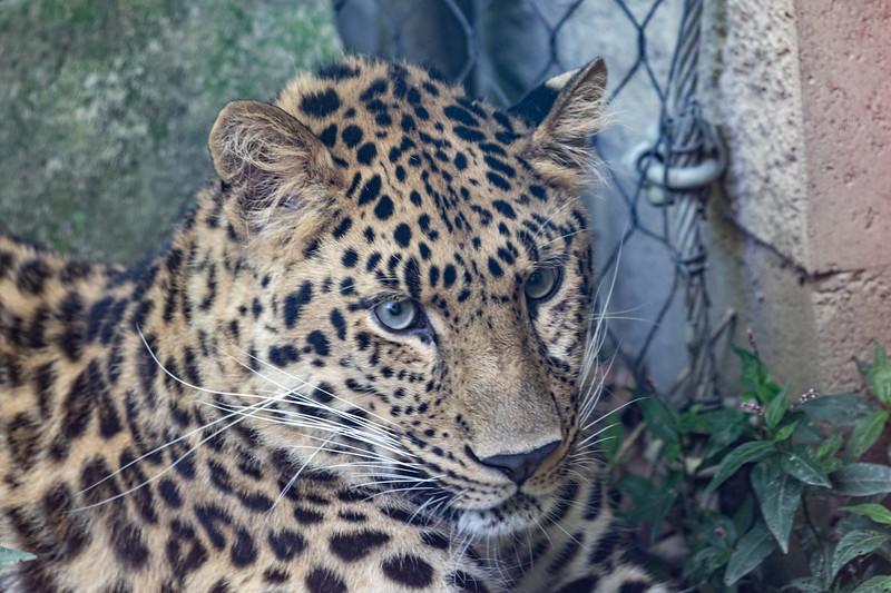Pittsburgh Zoo-7163.jpg