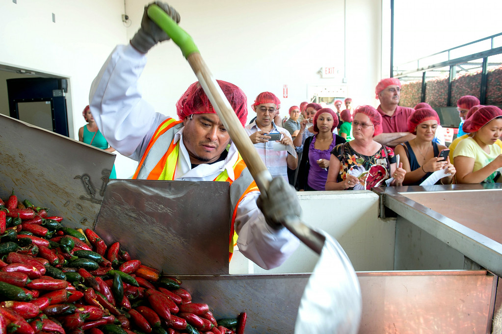 . Employee Victor Avila pushes the chili down the hopper machine during chili grinding process at Huy Fong Foods in Irwindale on Friday, August 22, 2014. (Photo by Watchara Phomicinda/ Pasadena Star-News)