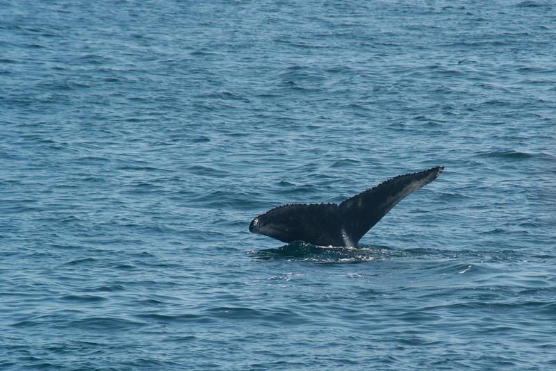 humpbacks-4150.jpg
