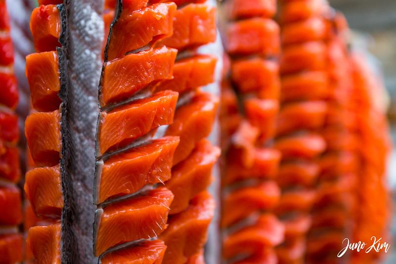ANHC Fishing Camp-6100250-Juno Kim.jpg