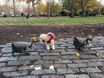 Thanksgiving Boston Common