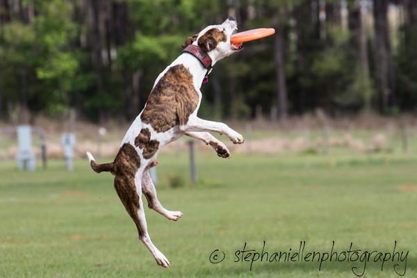 _MG_2684Up_dog_International_2016_StephaniellenPhotography.jpg