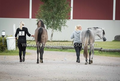 Fillies 1 years