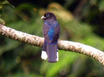 Colombia Birding_6.2012