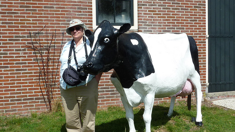Holly found another Dutch coo.