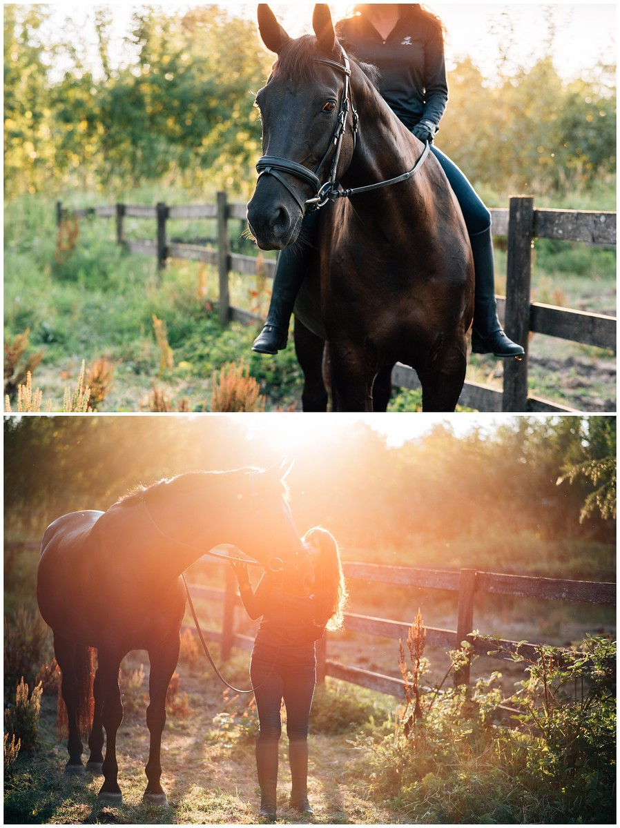 langley horse portrait