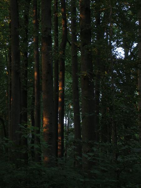Clayton dusk.jpg