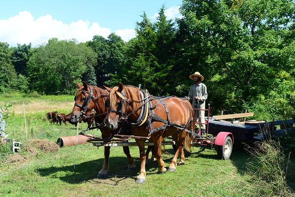 Great Song Farm