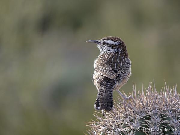 Birds of the SW