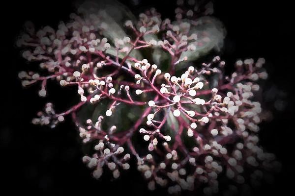 April 7 - Spring buds.jpg