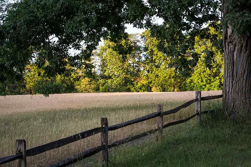Z73A9287-last-fence-www.jpg