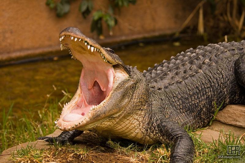 Yawn...