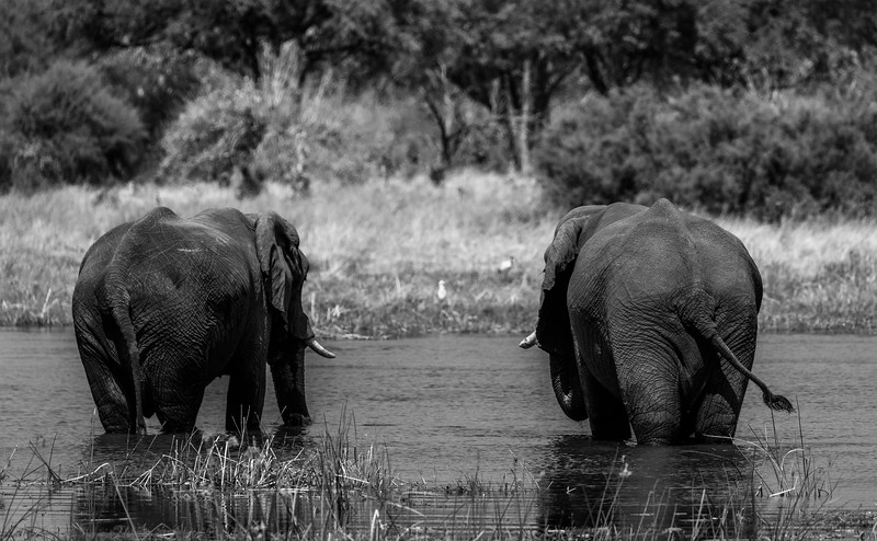 Botswana_June_2017 (2635 of 6179).jpg