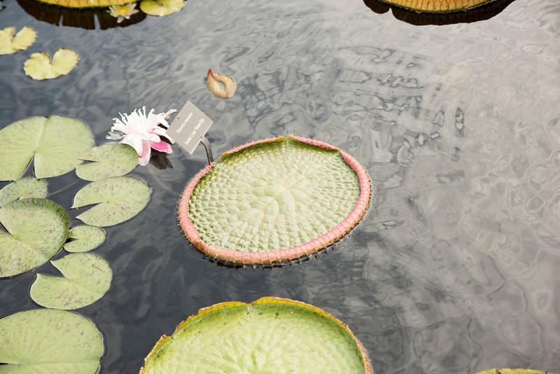 Chicago Botanic Garden 051.jpg