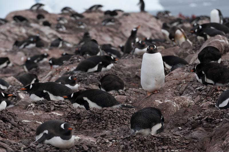 Antarctica-4696.jpg