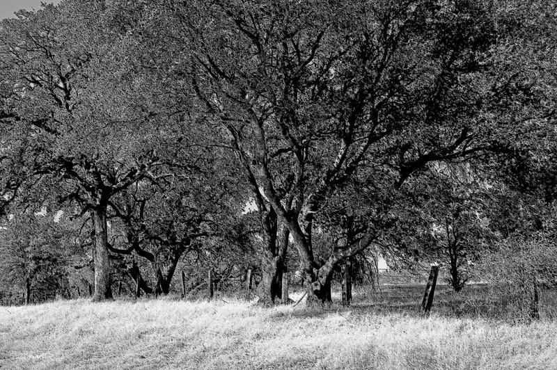 oaks 11-9-2012.jpg