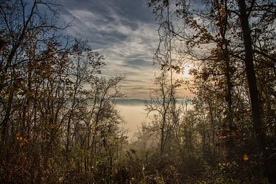 13_Rowe Woods_Autumn_2017