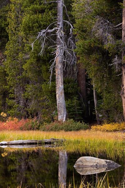 Rock and Tree at Siesta Lake