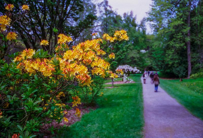 2014-04-27-Arboretum-ColorFilm
