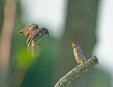 Bird Variety photos for sale