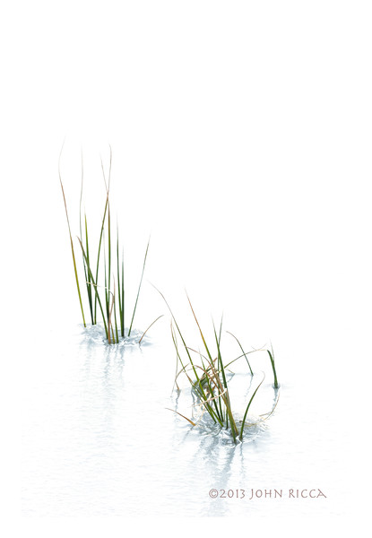 Isolated Grasses In Ice 2.jpg