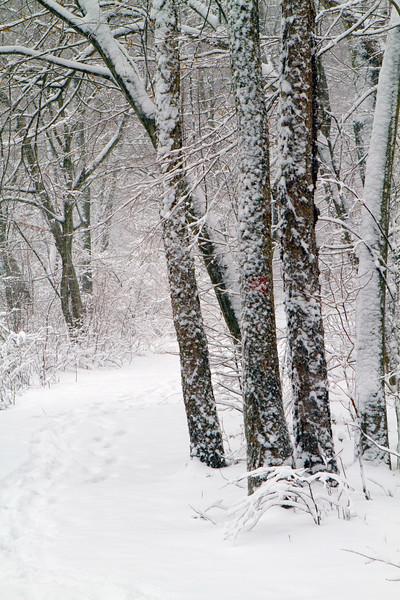 Smithville Snow Trails-291.jpg