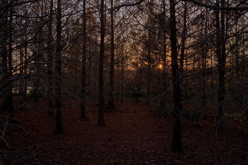 Sun Setting through the trees.jpg