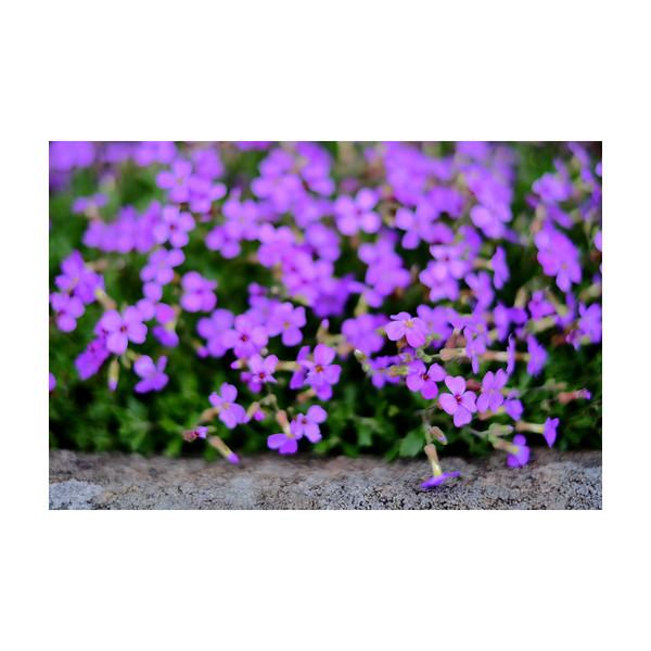 96_Purple_10x10.jpg