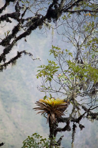 Peru_274.jpg