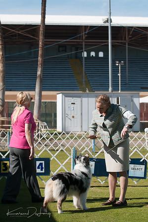 20170205_Australian Shepherds_Lost Dutchman Kennel Club-158.jpg