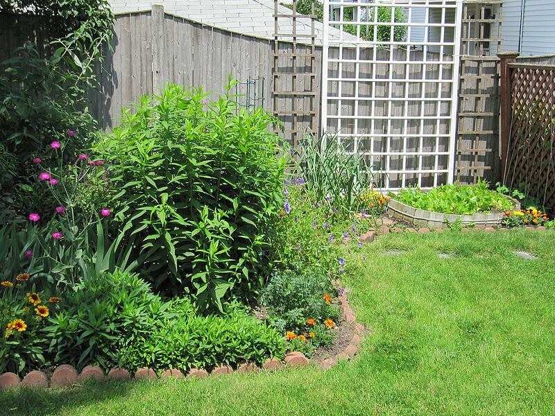 garden-2009-06-0755_std.jpg