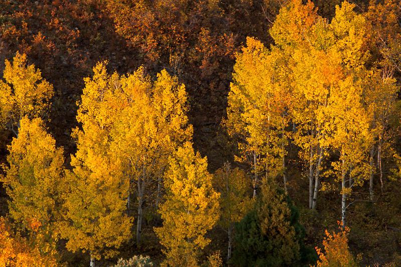 oct3_fall.jpg
