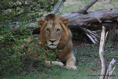 Tanzania- Selous Game Reserve