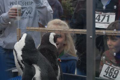 Run for Penguins 2008 - WALK