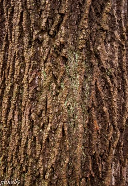 bark 013013-3.jpg