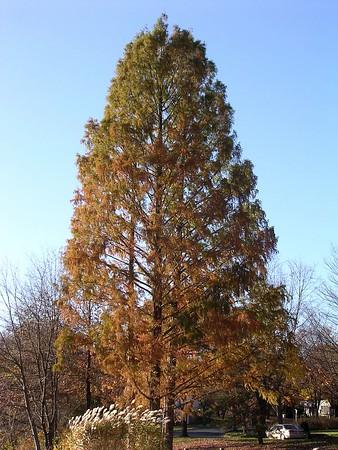 Nature in Late Fall - November-December 2004