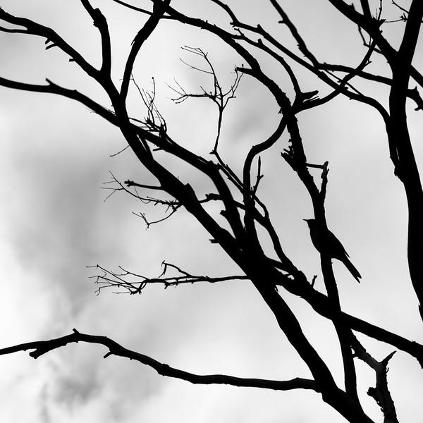 20180522 tree reference 1908  .JPG
